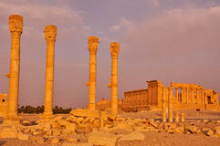 Colonnes antiques de Palmyra, Syrie image libre de droits