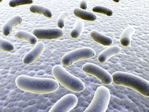 Colony of bacteria Royalty Free Stock Photography