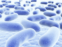 Colony of bacteria Stock Photography