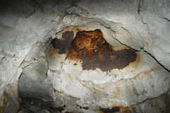 A colony of bats in a cave