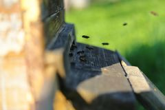 A colony of bees carry nectar to the hive stock photo