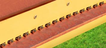 Colony of bees ready for fly out royalty free stock images
