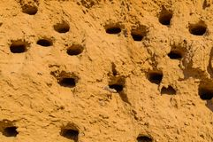 A colony of bird holes in a sandstone cliff. Bird nesting place. Beach, birds, baltic, beautiful, bright, cave, cliffs, color, country, day, europe, fresh royalty free stock photo