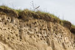 A colony of bird holes in a snadstone cliff at the beach near Baltic sea. Bird nesting place stock images