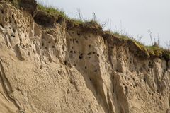 A colony of bird holes in a snadstone cliff at the beach near Baltic sea. Bird nesting place royalty free stock images