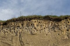 A colony of bird holes in a snadstone cliff at the beach near Baltic sea. Bird nesting place stock photography