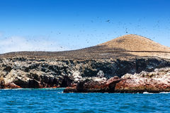 Colony of cormorants on island Royalty Free Stock Images