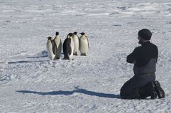 Colony, flock - Emperor Penguins in Antarctica. Overall plan stock images