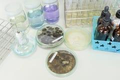 Colony of fungi Stock Photos
