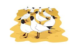 Colony of gulls. Colony of black headed gulls on the sand. Cartoon vector illustration stock illustration