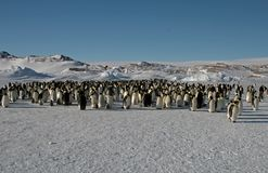 The colony of Imperial penguins stands in the snow near the Iceberg. Shooting from the air. Sunny day. royalty free stock photos