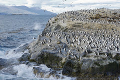 Colony of King Cormorants and Sea Lions on Ilha dos Passaros located on the Beagle Channel, Tierra Del Fuego royalty free stock photos