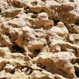 colony of mollusks on coquina rocks on beach Stock Photos