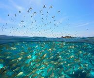 Free Colony Of Gulls Flying School Of Fish Underwater Royalty Free Stock Photography - 183033007