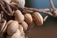 Free Colony Of Snails Royalty Free Stock Photo - 16358605