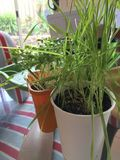 A Colony Of Plants. A bunch of healthy green plants in pots royalty free stock photography