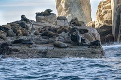 Sea lion colony seals relaxing on the rocks of cabo san lucas royalty free stock image