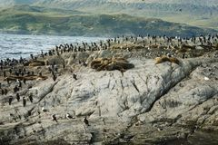 Colony Of Sea Lions And King Cormorants Resting On A Small Islan. D On The Beagle Channel, Tierra Del Fuego, Argentina Stock Image