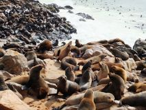 Colony of seals on Cape Cross. Namibia Stock Photo
