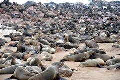 Colony of seals on Cape Cross Stock Photos
