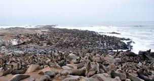 Colony of seals on Cape Cross. Namibia royalty free stock photos