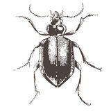 Coléoptères - illustration gravée par cru Images stock