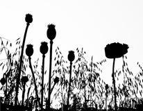 Coloque abaixo da papoila de milho e a grama e os cereais Ilustração do Vetor