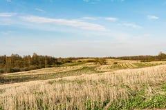 Coloque após a colheita, elimine hastes dos cereais e da grama verde emergente, céu azul com nuvens pequenas, tempo de mola fotos de stock royalty free