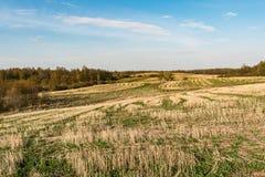 Coloque após a colheita, elimine hastes dos cereais e da grama verde emergente, céu azul com nuvens pequenas, tempo de mola foto de stock