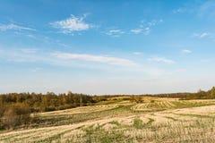 Coloque após a colheita, elimine hastes dos cereais e da grama verde emergente, céu azul com nuvens pequenas, tempo de mola imagem de stock