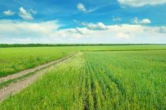Coloque com as orelhas maduras do trigo e do céu nebuloso azul Fotografia de Stock Royalty Free