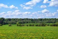 Coloque com flores amarelas, floresta e o céu com nuvens ajardina Foto de Stock