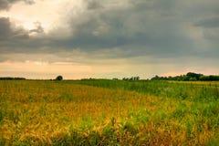 Coloque com grama dourada e verde sob o céu impressionante do por do sol fotografia de stock