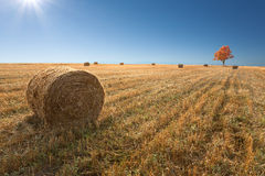 Coloque com os monte de feno após a colheita do trigo Imagens de Stock