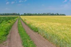Coloque com trigo ao lado do milho um dividido com uma estrada de terra Fotografia de Stock Royalty Free