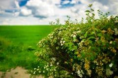 Coloque con colores y el cielo azul con las nubes Fotos de archivo libres de regalías