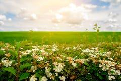 Coloque con colores y el cielo azul con las nubes Imagen de archivo libre de regalías