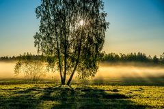 Coloque con el abedul del árbol en amanecer brillante brumoso de la mañana Fotos de archivo libres de regalías