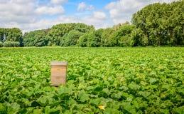 Coloque con el cultivo orgánico de la calabaza y una colmena Imagenes de archivo