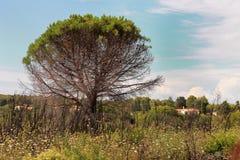 Coloque con la hierba, los hils, el árbol grande y el cielo Foto de archivo