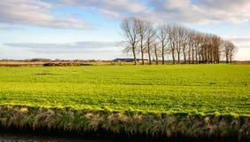 Coloque con la hierba verde fresca joven recientemente sembrada Imagen de archivo libre de regalías