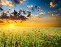 Coloque con la hierba verde y las amapolas rojas Imagen de archivo libre de regalías