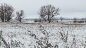 Coloque con la hierba y el paisaje muerto ausente del invierno de los árboles de Rusia de la nieve metrajes