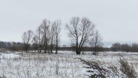 Coloque con la hierba y el paisaje muerto ausente del invierno de los árboles de Rusia de la nieve almacen de metraje de vídeo