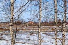Coloque con los remanente de la nieve a través de las ramas del abedul Imagen de archivo libre de regalías