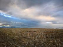 Coloque después de la cosecha con el cielo oscuro de la puesta del sol imágenes de archivo libres de regalías