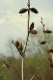 Coloque a grama Bardana contra o céu e a grama Foto de Stock