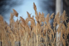 Coloque la hierba Foto de archivo libre de regalías