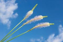 Coloque las flores contra el cielo azul con las nubes Fotografía de archivo