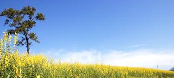 coloque las flores del ` s, los árboles y el cielo azul Imágenes de archivo libres de regalías